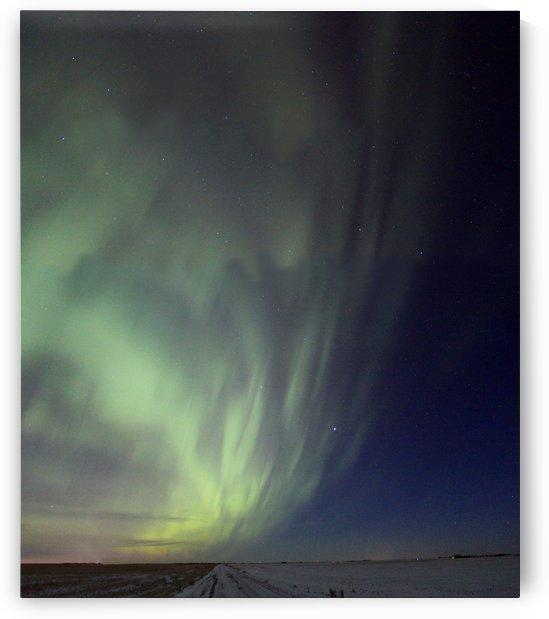 Aurora by Jody Majko