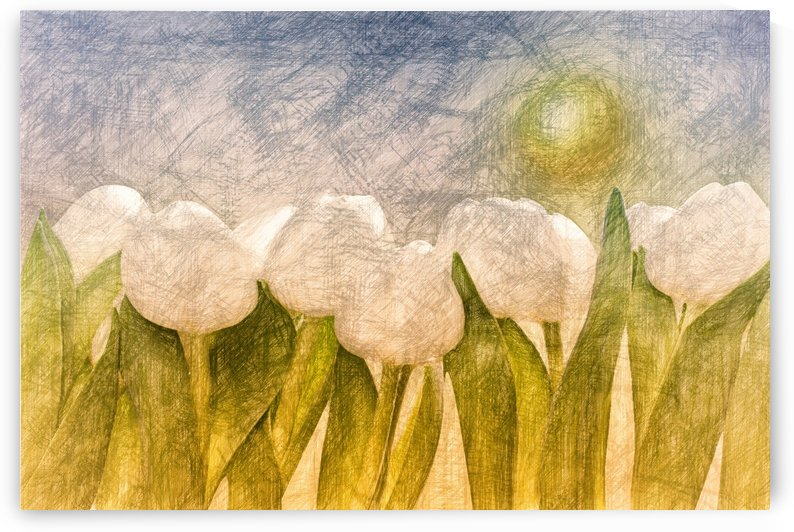 white Tulips  by Dagmar Marina