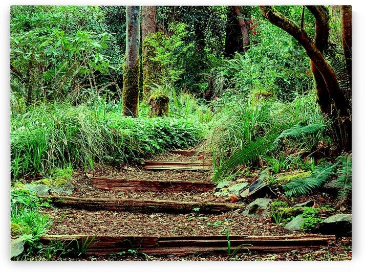 Nature Walk by Vinka Perzina Photography