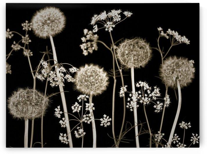 Meadow flowers by Assaf Frank