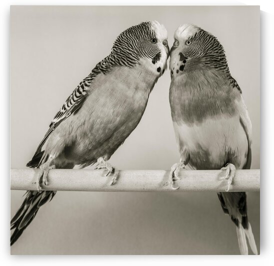 Birds by Assaf Frank