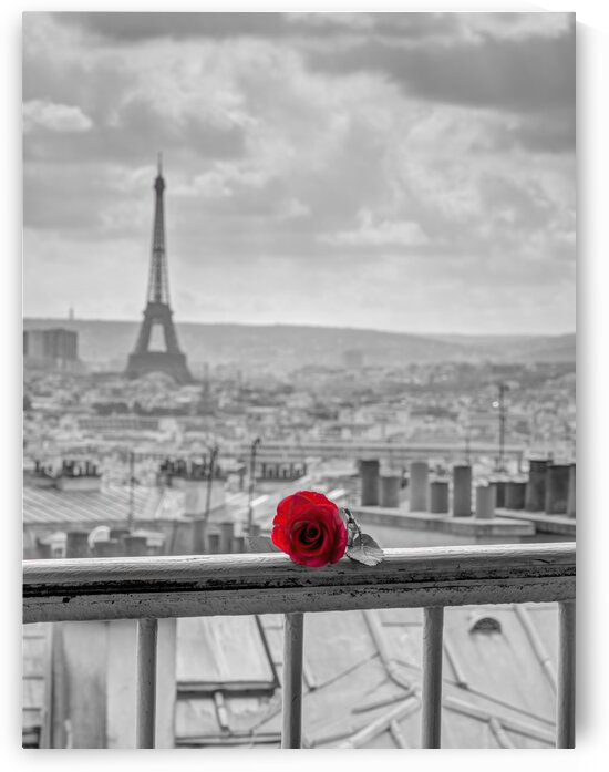 Rose on balcony railing with Eiffel Tower in background, Paris, France by Assaf Frank