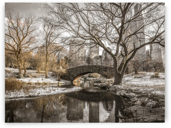 Central park in New York by Assaf Frank