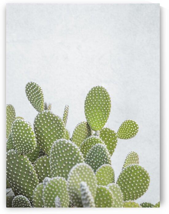 Cactus plant by Assaf Frank