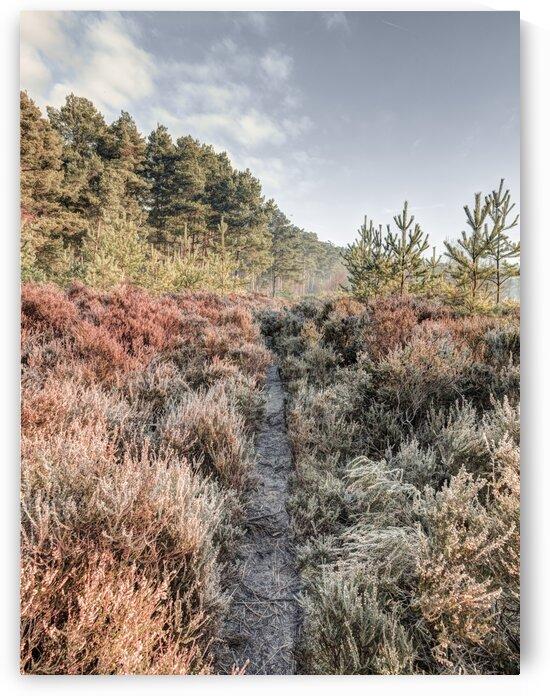 Autumn forest by Assaf Frank
