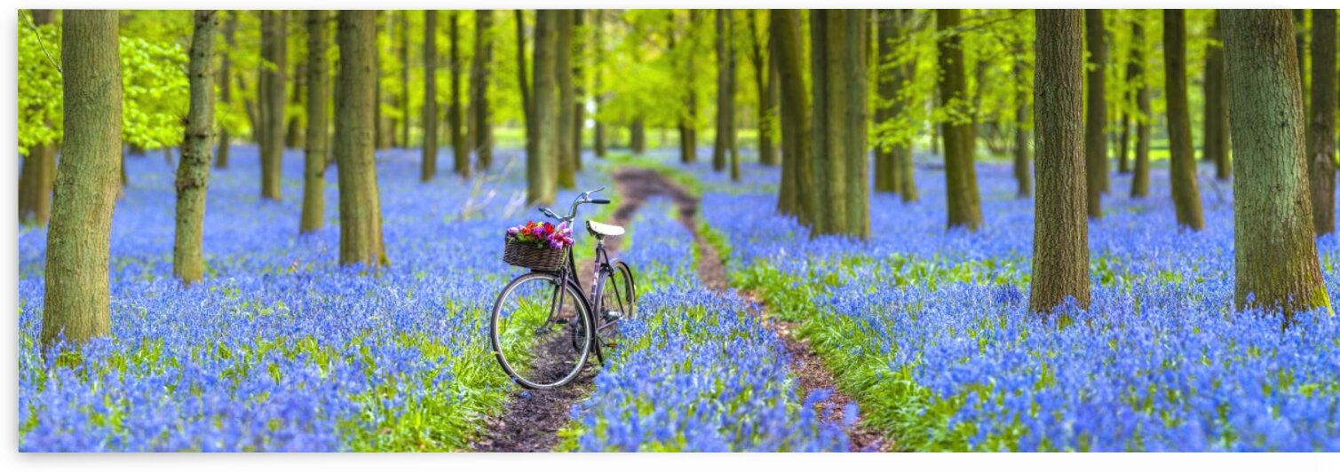 Bicycle in spring forest by Assaf Frank