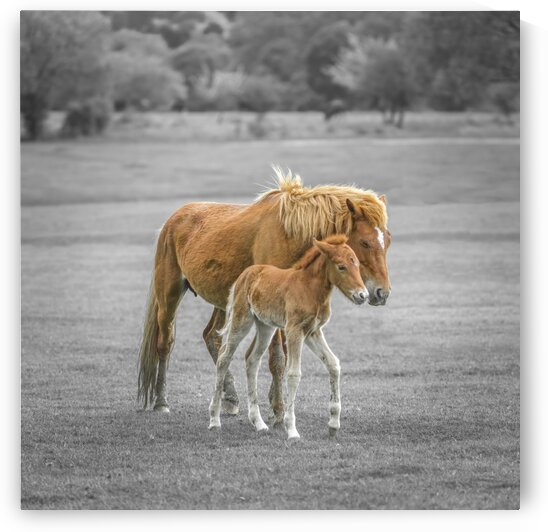 Horse with Pony by Assaf Frank
