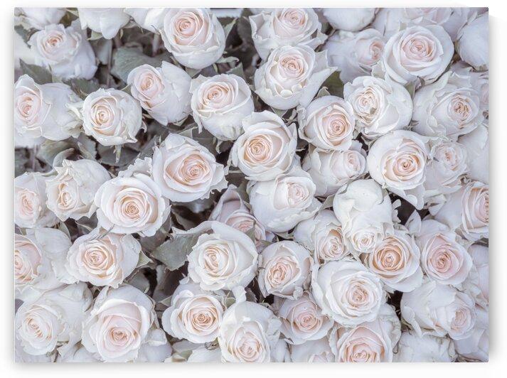 Full frame of Roses by Assaf Frank
