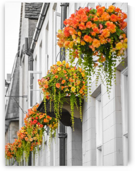 Flowers over windows of an old building in Tetbury, Cotswolds by Assaf Frank
