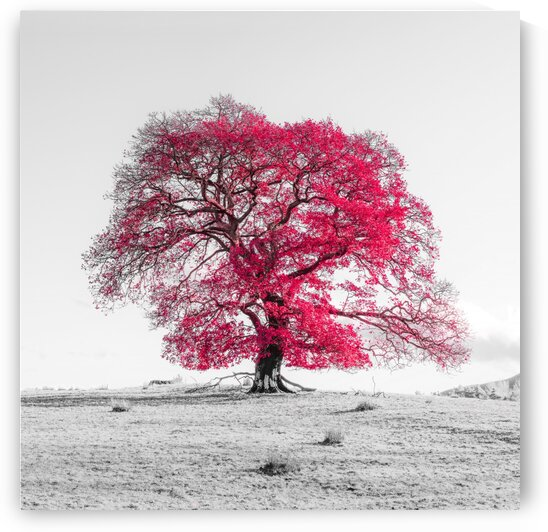 Tree on a hill, red by Assaf Frank