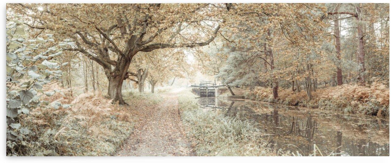Canal through a forest by Assaf Frank