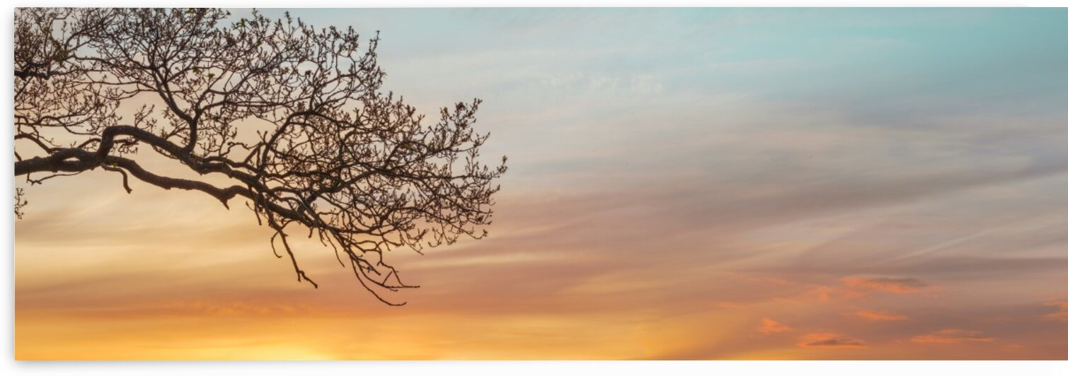 Branches at sunset by Assaf Frank