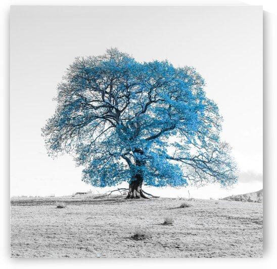 Tree on a hill, blue by Assaf Frank