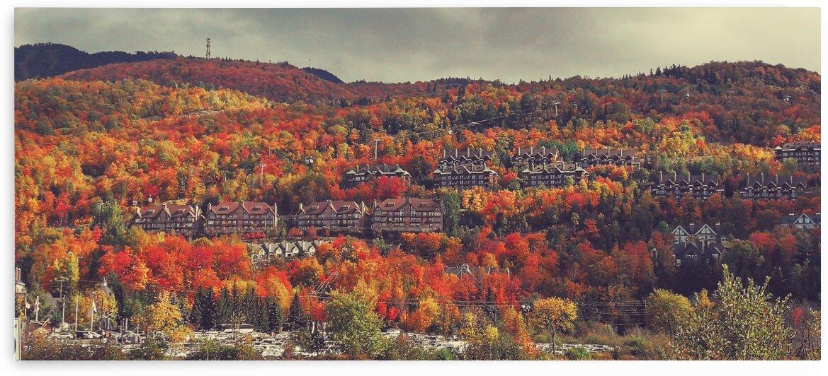 Canadian autumn by Patricia Jekki