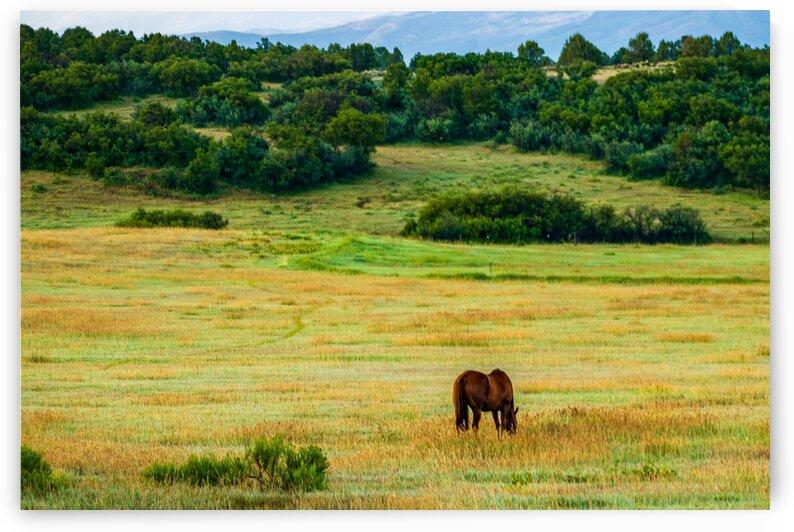 Horse in the Feild by Dave Massender