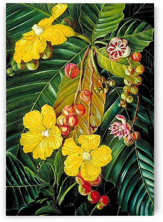 Foliage Flowers And Fruit Of A Swamp Shrub_OSG by One Simple Gallery