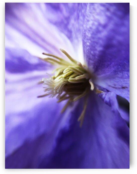 05_Purple Flower Heart - Coeur De Fleur Pourpre_7283 by Emmanuel Behier-Migeon
