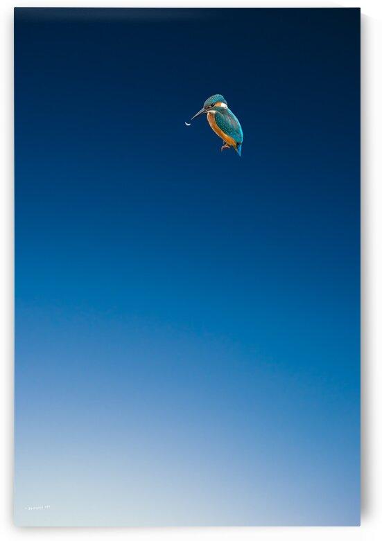 Blue Sky Bird by pourquoi art