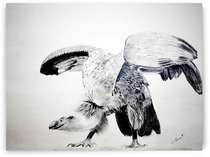 AP - The Hawk by Clement Tsang