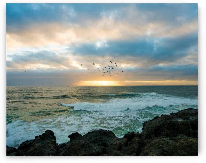 Oregon Coast by Lindsey Koehler Photography