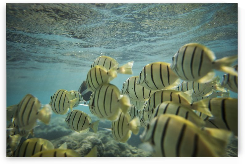 Convict Tangs by Ramon Brockington
