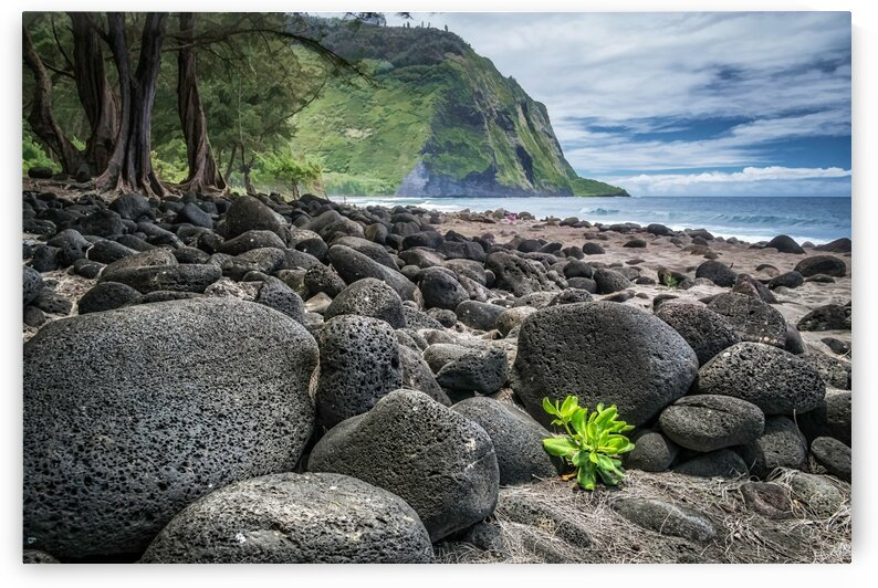 volcanic beach by Andrew Wasik