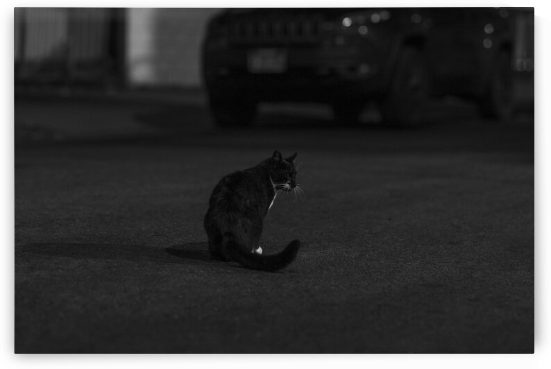 Stray Print Series No.8 by Christian Stark Photography