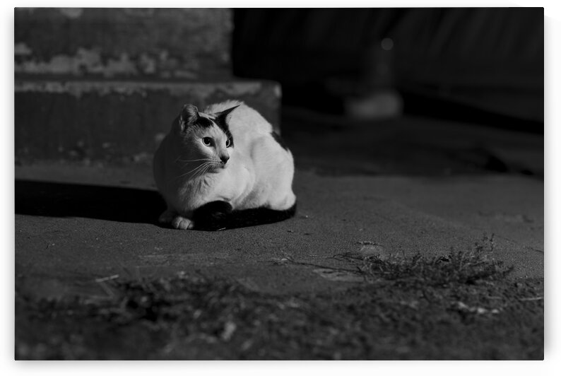 Stray Print Series No.1 by Christian Stark Photography