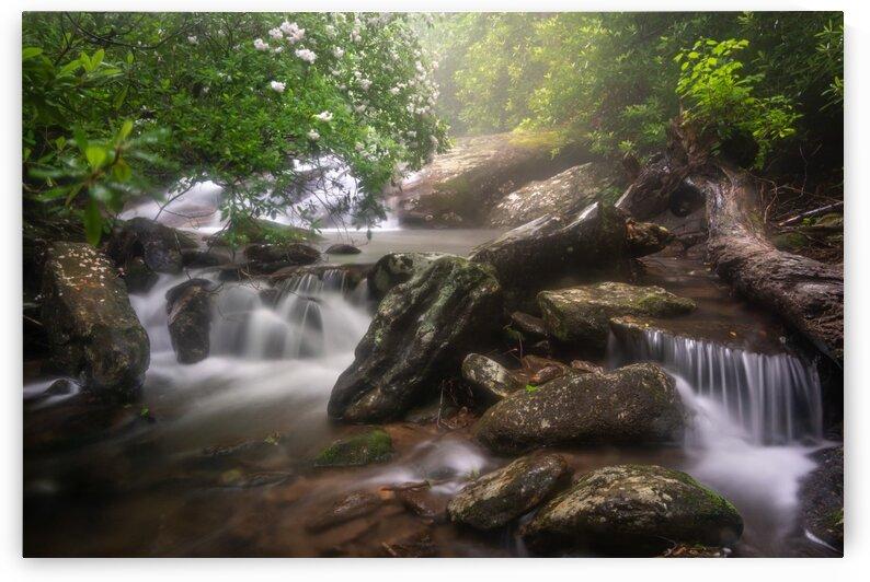 White Oak Falls I by Mark Daniels