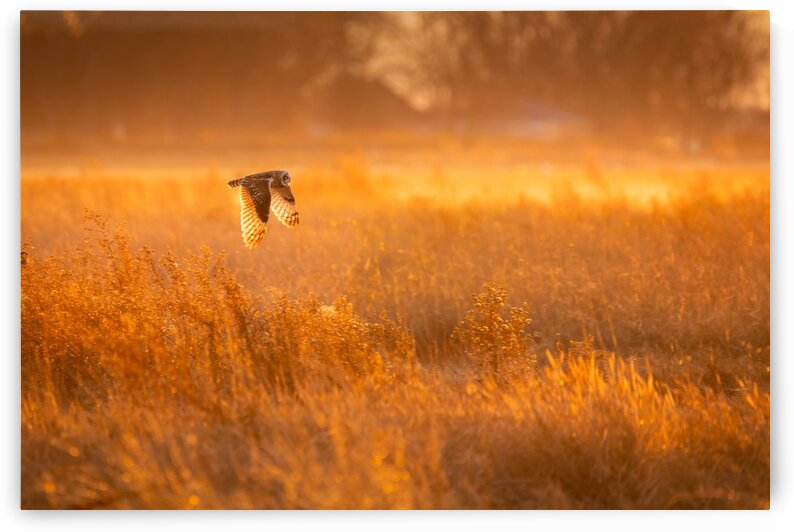 Golden Hour by Pete Nuij Photography