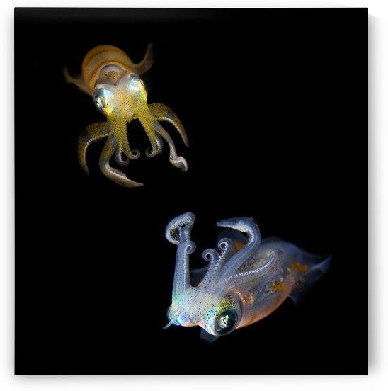 Sea Jewels by 1x