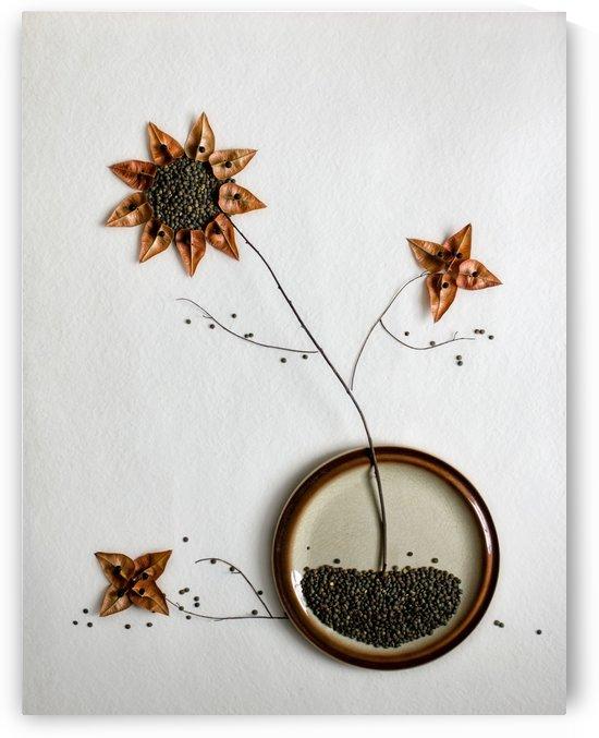 Herbarium... by 1x
