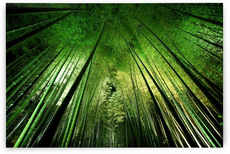 Bamboo night by 1x