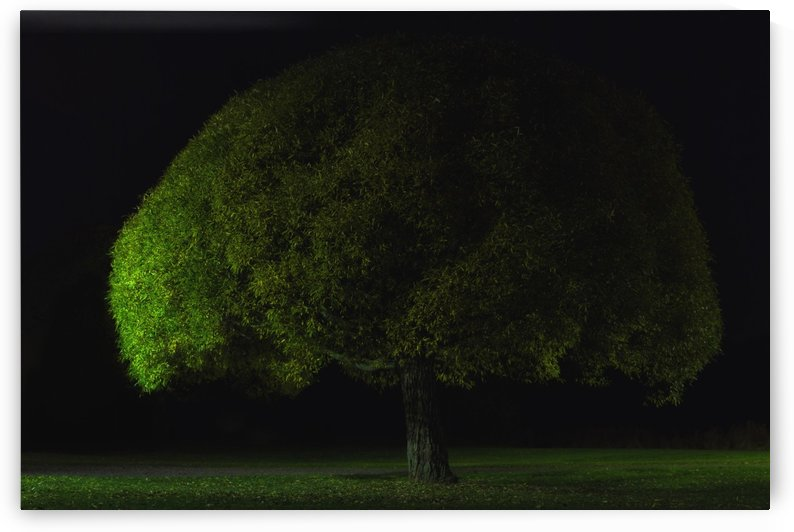 Mushroom tree by Stelios Kirtselis  by 1x