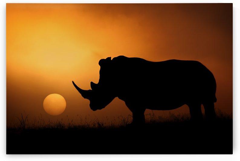 Rhino Sunrise by 1x