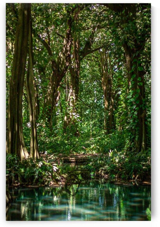 Tahitian jungle by Samantha Hemery