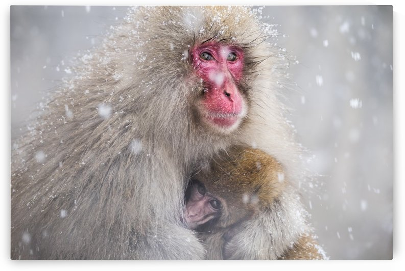 Mothers Warmth by Takeshi Marumoto  by 1x