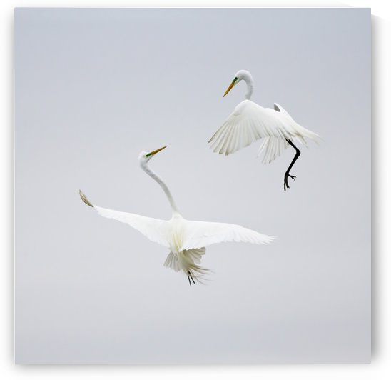 Dancing in the Air by Karen Wang  by 1x