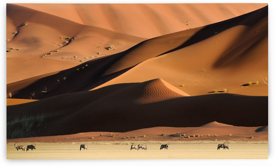 Namib Dunes by 1x