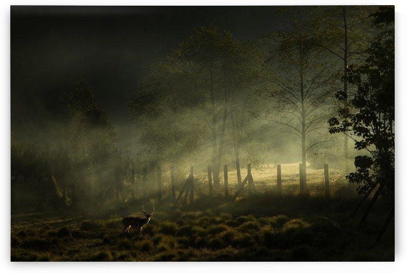 Misty Morning by Nunu Rizani  by 1x