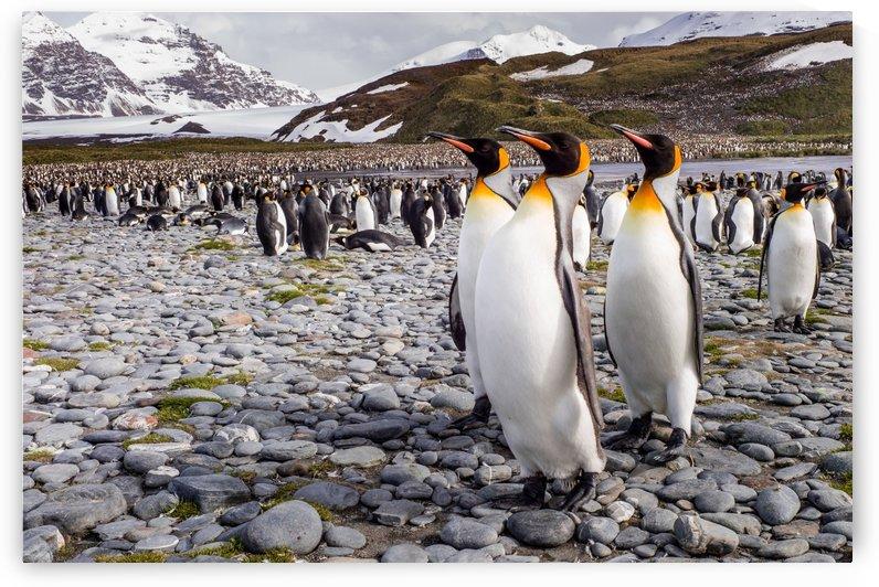 Penguins of Salisbury Plain by 1x