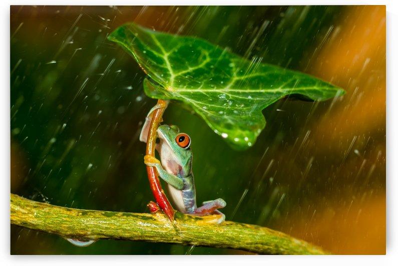 Ohh Noo :( It's Raining by 1x