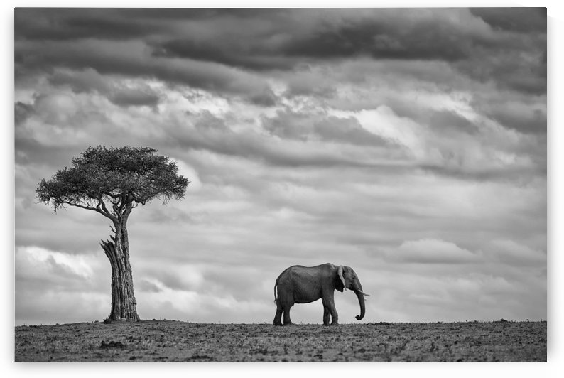 Elephant Landscape by Mario Moreno  by 1x