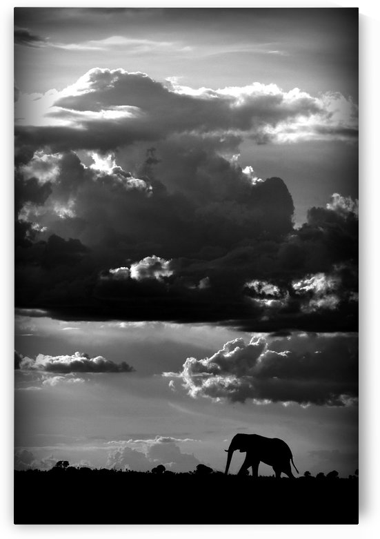 He walks under an African Sky by WildPhotoArt   by 1x