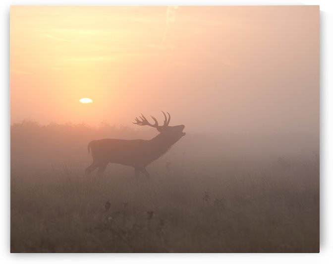 Misty Morning Stag by 1x