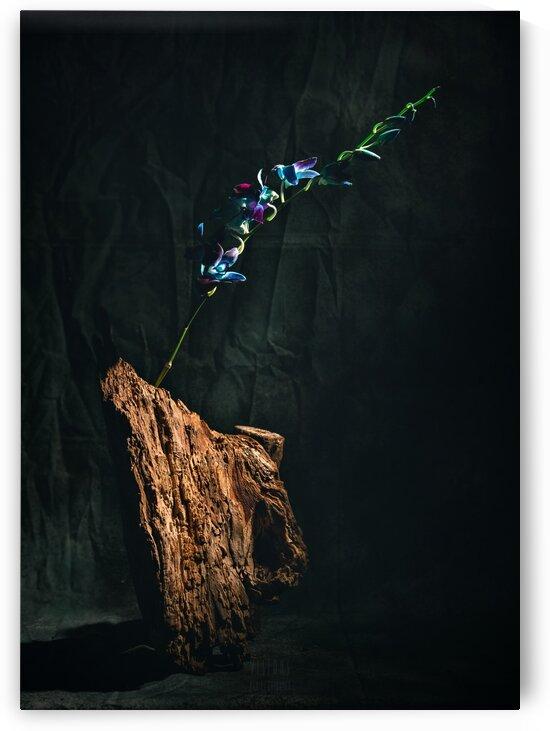 Le jour de lillumination by Daniel Thibault artiste-photographe