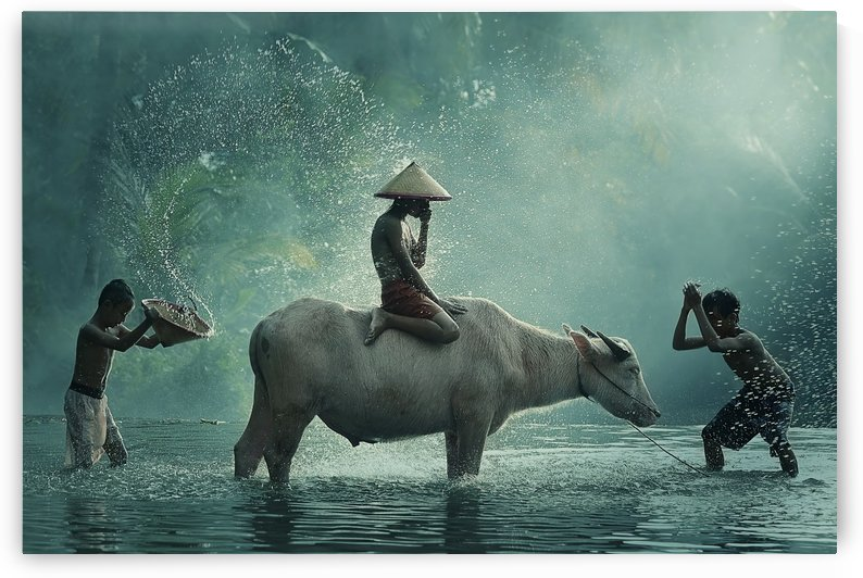 Water Buffalo by 1x