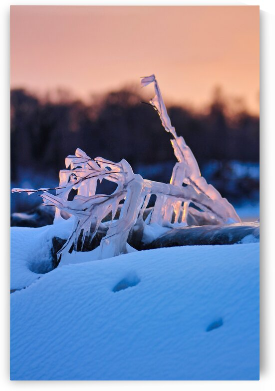 Frozen Nature 0362 by Eric W Reynolds