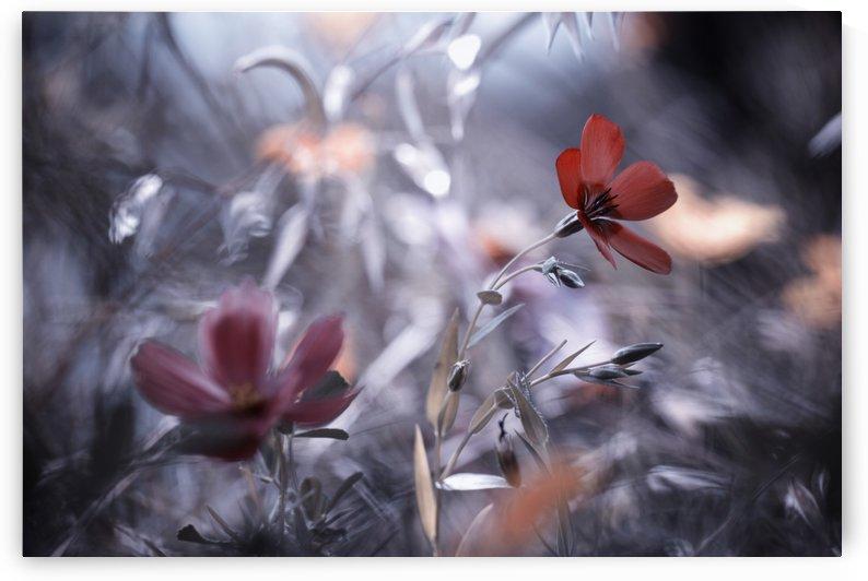 Une Fleur, une Histoire by Fabien BRAVIN  by 1x
