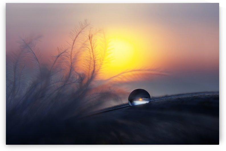 Morning by Peep Loorits  by 1x